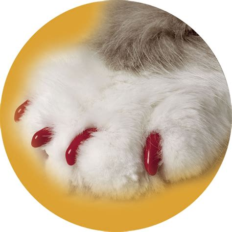 nail caps 20 best of cat nail tips kittens wallpapers