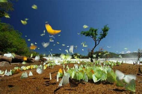 imagenes de mariposas national geographic national geographic imagenes sorprendentes taringa