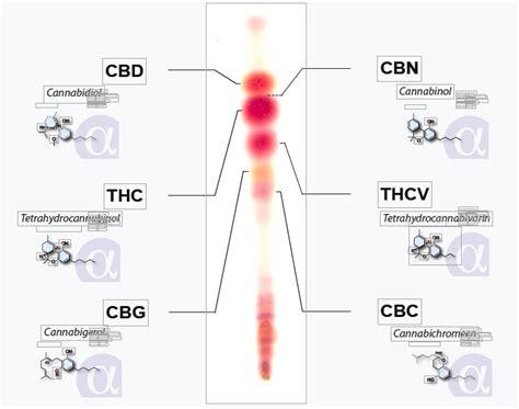 hemp cbd a primer on cannabinoids and cannabis medicine for better health books test your marijuana for thc cbd at home