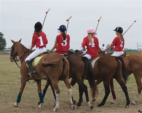 More Ponies For Polo by Pologirlshorses Polo The Free Encyclopedia