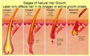 lotus beverly hills skin center laser hair removal best laser hair removal los angeles beverly hills sean
