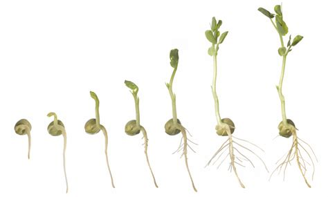 starting plants from seeds or cuttings great tips from a master gardener fox island