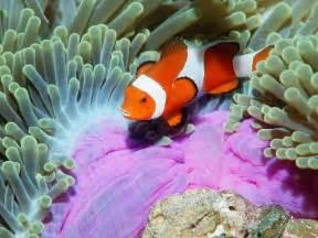 tropical sea fish image with beautiful designs jpg undersea fish