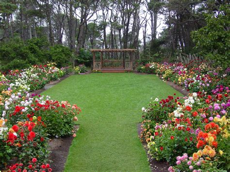 backyard florist mendocino coast botanical gardens the emerald magazine