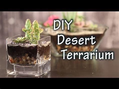 diy tutorial      terrarium  cacti