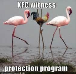 Funniest Animal Memes - witness protection program