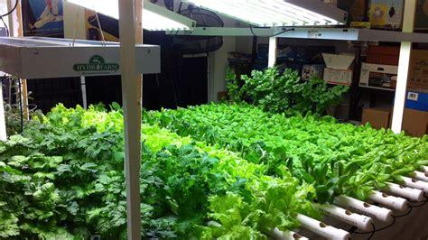hydroponic indoor gardening challenges  growing