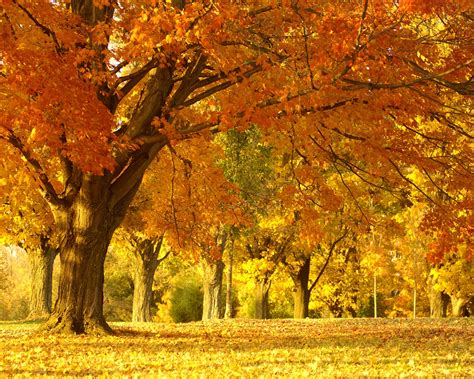 imagenes naturaleza otono paisajes de ensue 241 o paisajes de oto 241 o