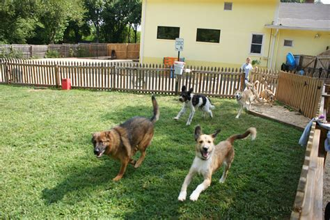 dog in the backyard dog daycare wikipedia