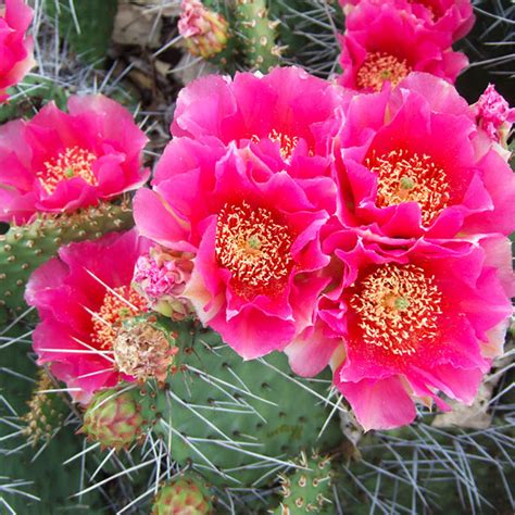 Backyard Kitchen Ideas by Growing Cactus Plants In Cold Winter Climates