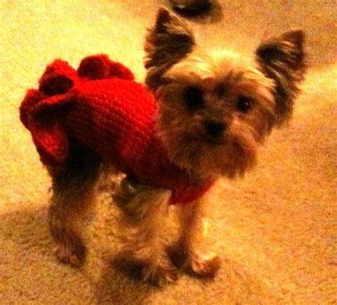 free small dogs knitting patterns for yorkie breeds picture
