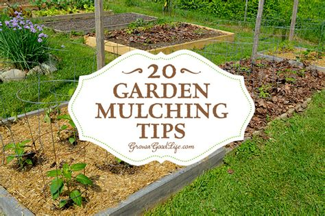 Vegetable Garden Mulch Ideas 20 Garden Mulching Tips From Seasoned Growers