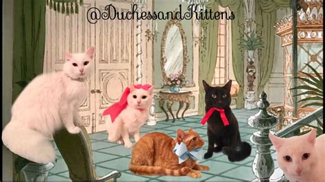 los aristogatos en la vida real mujer llamo  su gata rescatada duquesa  esta tuvo  gatitos