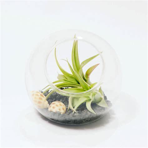 Vase Terrarium by Glass Orb Vase Air Plant Terrarium By Dingading Terrariums