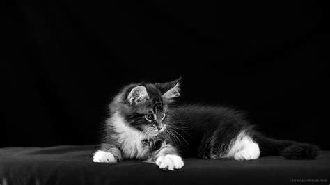 imagenes para fondo de pantalla gatos 2560x1440 wallpaper gato wqhd 1440p wide quad hd