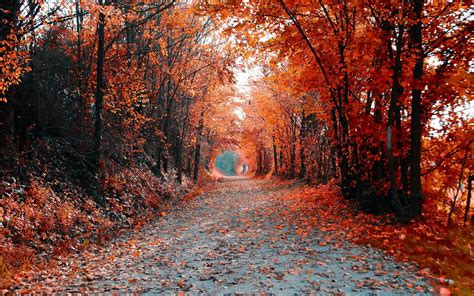 road tree landscape autumn flowers hd wallpaper