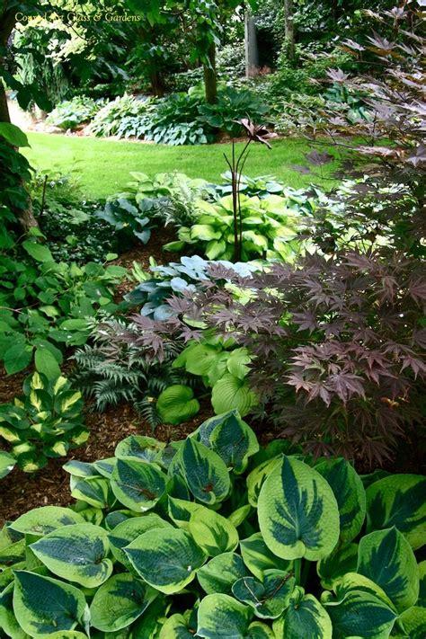 shade garden ideas hostas photograph hosta gardens