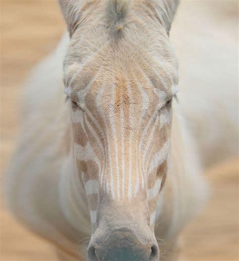 imagenes de animales albinos galer 237 a cuando la naturaleza se queda sin color 17