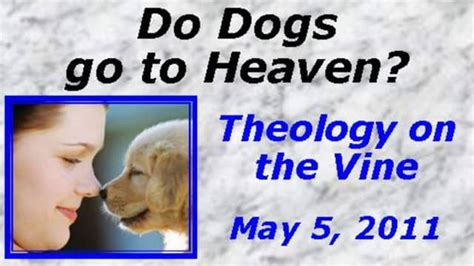 do all dogs go to heaven grieving the loss of your pet books do dogs go to heaven on vimeo