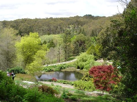 My Botanical Garden Mount Lofty Botanical Gardens Botanic Gardens Of The