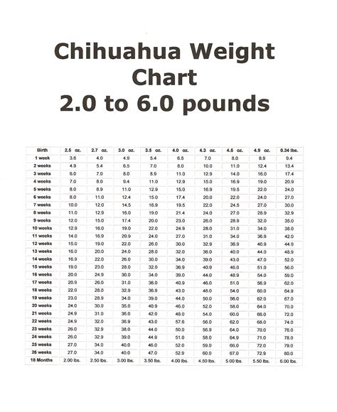 chihuahua puppy growth chart puppy growth chart chihuahua duckyschihuahuas nursery ayucar