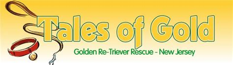golden retriever rescue nj golden retriever rescue inc nj newsletter archives