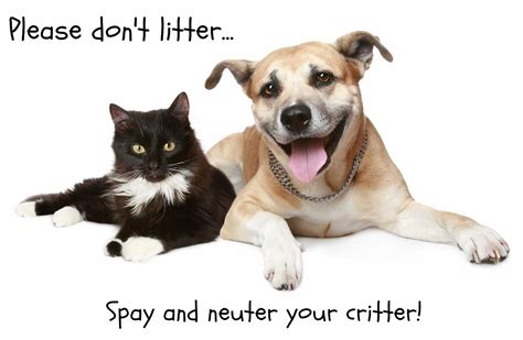 how much is it to get a neutered 7 myths about spaying and neutering pet attack