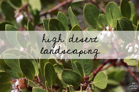high desert landscaping high desert landscaping ideas the johnsons plus
