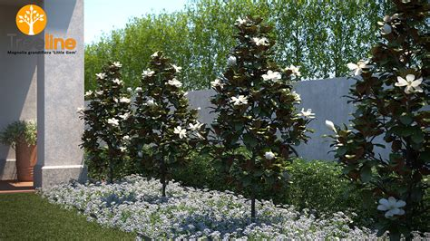 Small Plant Supports by Magnolia Grandiflora Little Gem 3dmk