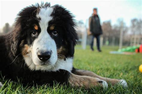 beba 1 ab wann ab wann eine hundeschule besuchen was ist sinnvoll