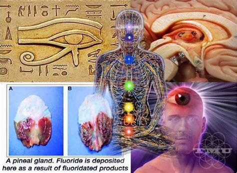 Detox Flouride Feel by How To Decalcify And Detoxify Your Pineal Gland