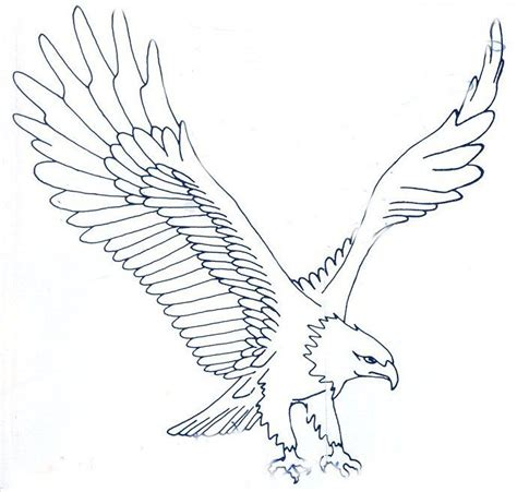 tattoo eagle sketch eagle sketches class of 1978 carson graham crafts