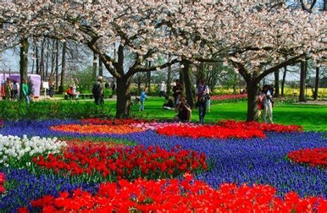 ci di fiori in olanda parco keukenhof il cuore fiorito d olanda pollicegreen