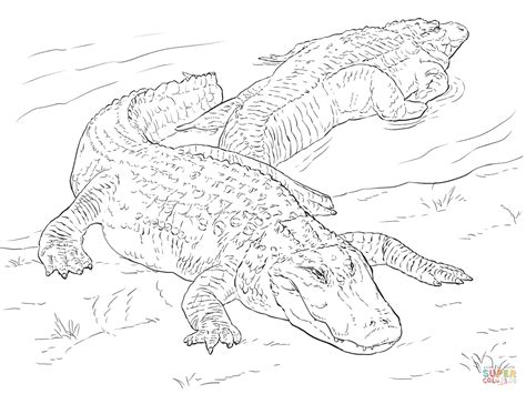 Coloring Page Of American Alligator | two american alligators coloring page free printable