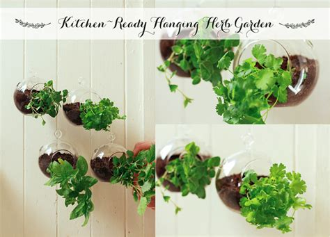 hanging window herb garden kitchen ready hanging herb garden monica potter