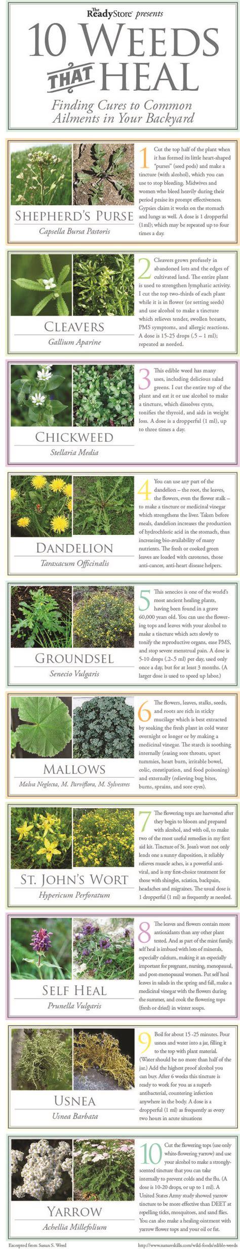 outdoor medical marijuana garden photos weed helps module