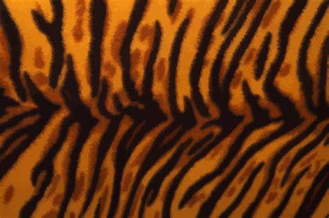 pattern tiger photoshop clipart tiger fur