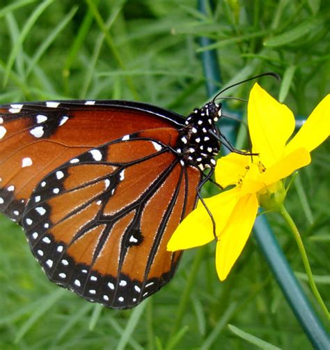 attracting butterflies and hummingbirds to your backyard garden clippings niagara college greenhouse and nursery