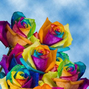 rainbow colored roses rainbow roses free delivery rainbow colored roses globalrose