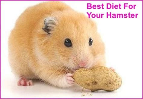 Best Bedding For Hamsters by 156 Best Images About For Hamster On