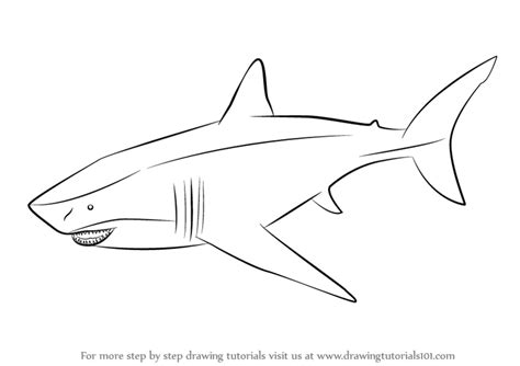 megalodon shark coloring page image gallery megalodon drawings