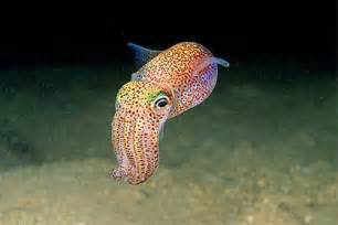 Are Moles Blind Smaller Male Cuttlefish Will Disguise Themselves As Female