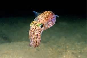 the cuttlefish | Tumblr
