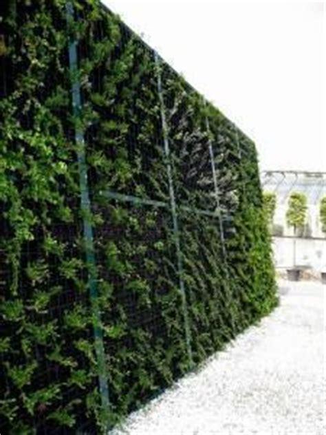 barriere antirumore per terrazzi sistemi fonoassorbenti vegetali