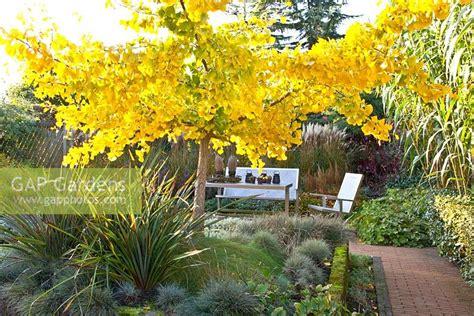 ginkgo gardens london garden ftempo