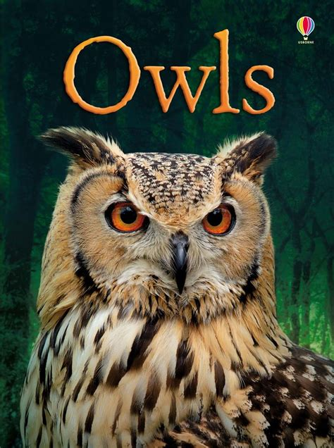 owl picture book owls at usborne children s books
