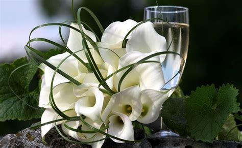 linguaggio dei fiori calla calla fiore significato fiori fiore della calla