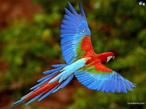full hd wide nature wallpapers images  beautiful nature