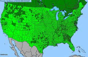 Allergy Map Usa by Ragweed Allergy Map Images Amp Pictures Becuo