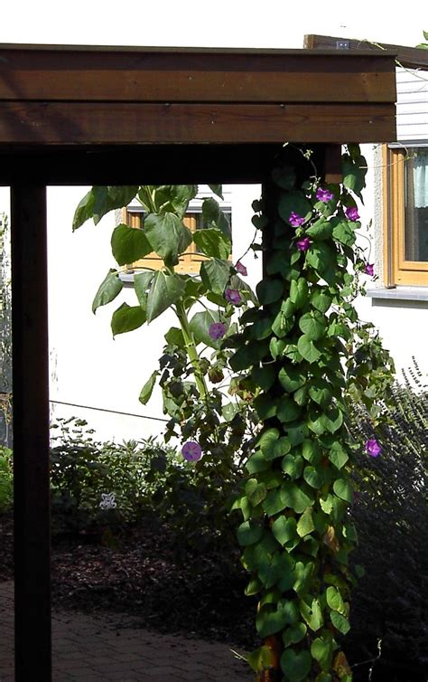 sicht und lärmschutz für den garten zaun begr 252 nen idee
